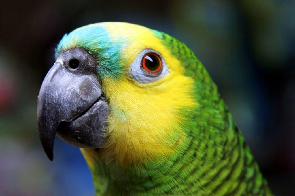 parrot_feb_2020