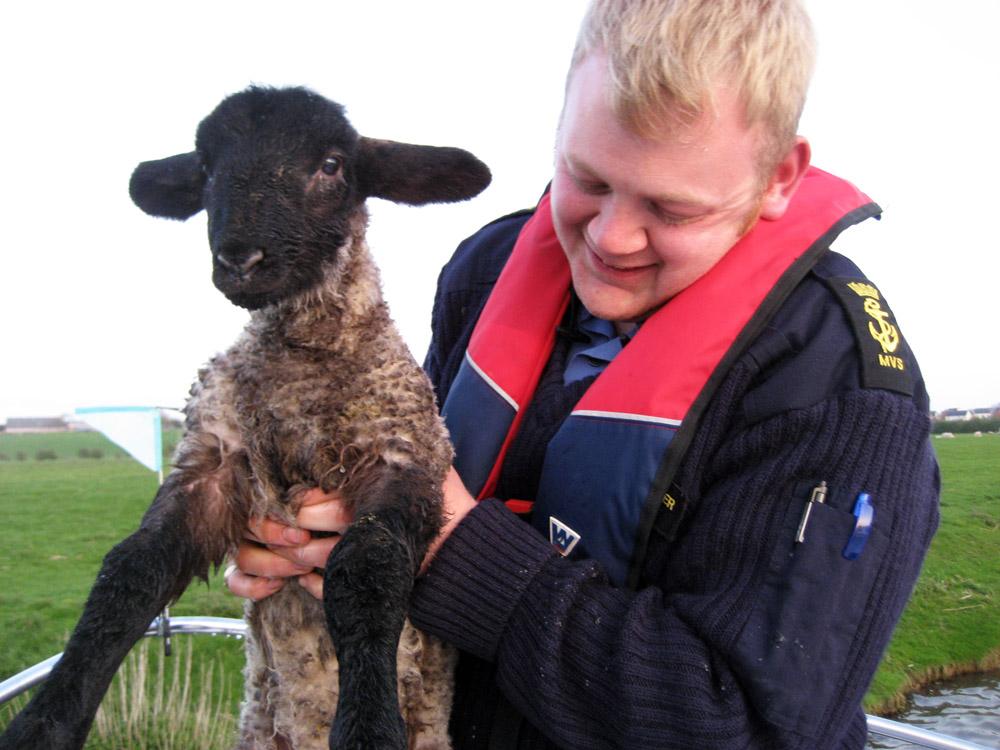 Lamb 02